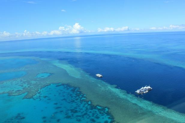 Reef 617 x 412